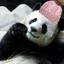 Panda-1111